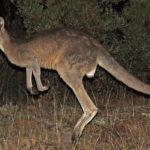 НЛО в Австралии