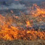 Более 500 человек остались без жилья из-за пожаров в Красноярском крае