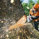 Борьба вместе с искусственным интеллектом против нелегальной вырубки лесов