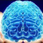 Ученые оживили мозг свиньи